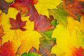 Autumn Background — Stock Photo