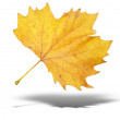 Yellow autumn tree leave with shadow — Stock Photo