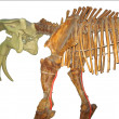 Stock Photo: Prehistoric animal skeleton isolated