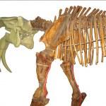 esqueleto de animal pré-histórico isolado — Foto Stock