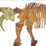 prähistorische Tiere Skelett isoliert — Stockfoto