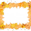 Frame of autumn yellow leaves — Stock Photo
