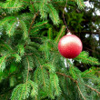 Christmas tree branch with red ball - Stock Photo