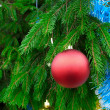 Christmas tree branch detail — Stock Photo