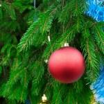 détail de branche de sapin de Noël — Photo