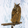 Stock Photo: Great Horned Owl on a support