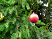 Granen gren med röd boll — Stockfoto