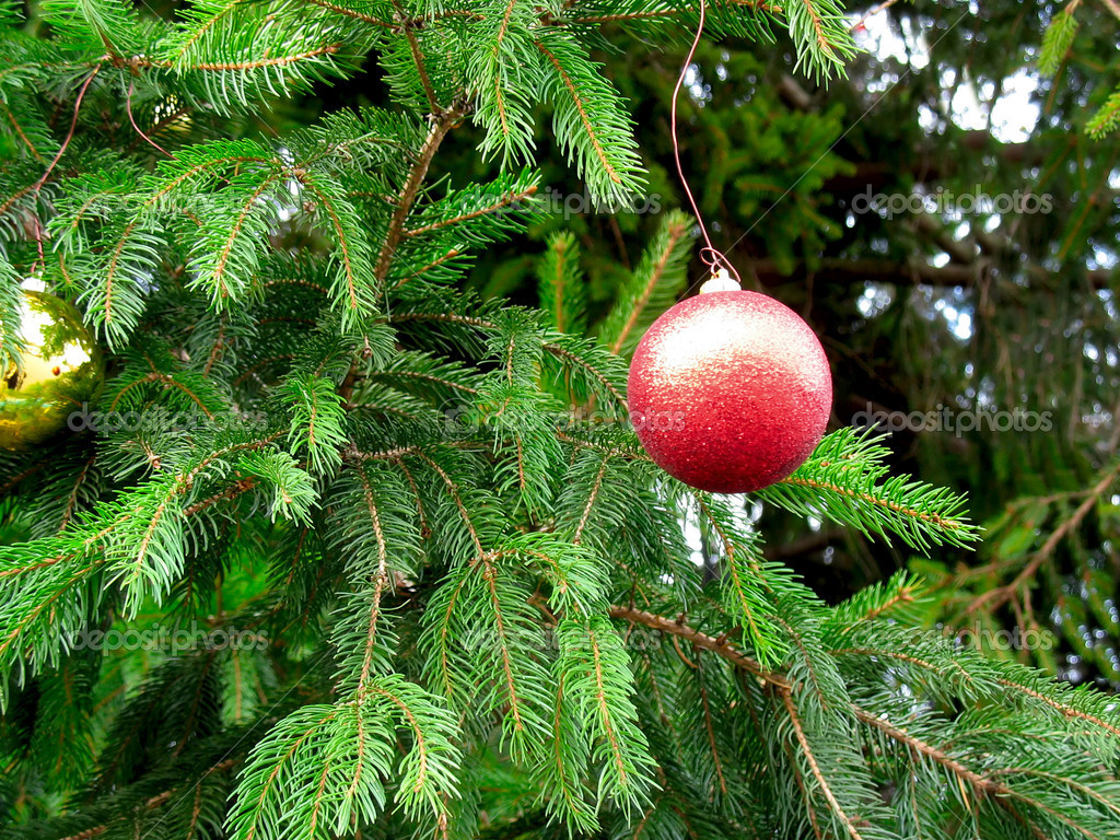 Christmas tree green branch detail with red ball decoration — Stok fotoğraf #2273479