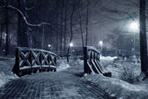 Winter park at night. — Stock Photo