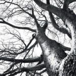 Winter tree conceptual image. — Stock Photo #2084237