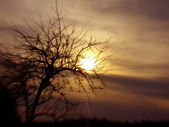 Tree and sundown conceptual image. — Stock Photo