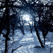 Winter sundown in forest image. - Stock Photo
