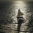 Sail Boat Silhouette - Stock Photo