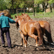 Ploughing the Field with Horses — Stock Photo