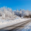 Winter tree lined country road — Stock Photo #2511579