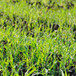 Green field — Stock Photo #2677162