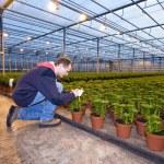 identifiera växter — Stockfoto