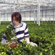 Examining potted plants — 图库照片
