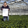 Stock Photo: Blank sign in a glasshouse