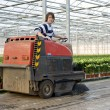 Cleaning a glasshouse — Stockfoto
