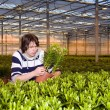 Checking plants — Stock Photo