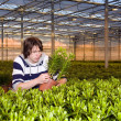 Checking plants — Stock Photo #2122129