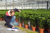 Measuring the height of plants — Stock Photo