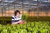 Comprobación de las plantas — Foto de Stock