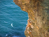 Seabirds and cliff — Stock Photo