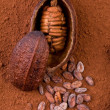Royalty-Free Stock Photo: Cocoa