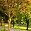 Autumn Park — Stock Photo #2094991