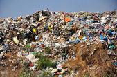 Garbage — Stock Photo