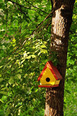 Bird Tree House — Stock Photo