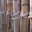 Hedge bamboo - Stock Photo