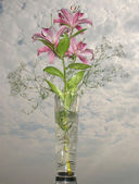 Bouquet of lilies and Gypsophila — Stock Photo