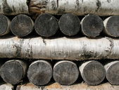 Stack of birch firewood — Stock Photo