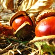 Royalty-Free Stock Photo: Chestnut