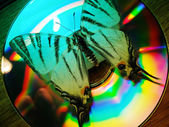 Butterfly and CD — Stock Photo