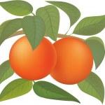 Постер, плакат: Oranges