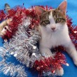 Kitty with tinsel — 图库照片