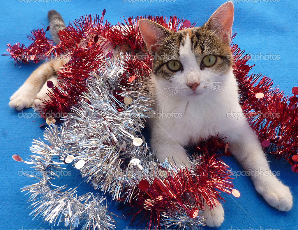 Christmas tinsel and cute toroiseshell kitten on blue rug — Stok fotoğraf #2171505