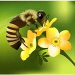 Bee on flower — Stock Vector