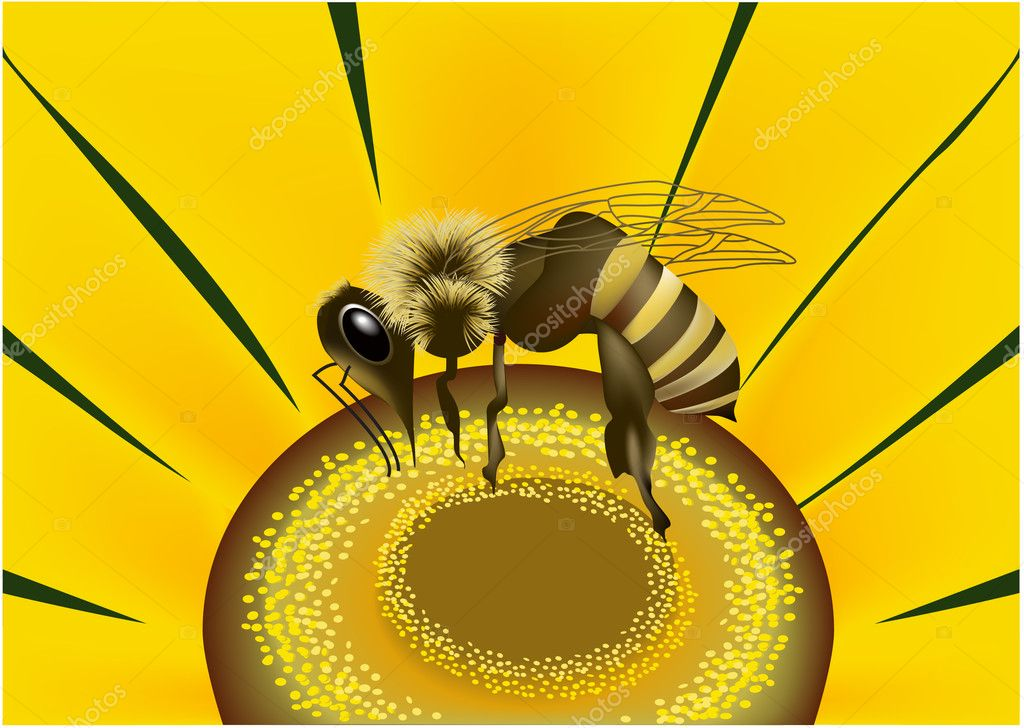 Vector bee on flower. — Stock Vector #2416194