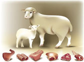 Sheep, lamb & mutton — Vetor de Stock