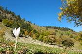 Autumn in mountains of caucasus — Stock Photo