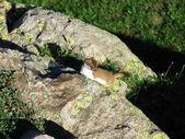 Маленький хищник — Стоковое фото