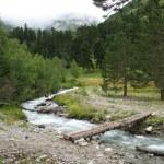 Mountain stream — Stock Photo #2432086