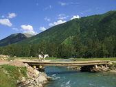 The bridge on the mountain river — Stock Photo
