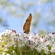 Brown butterfly — Stock Photo