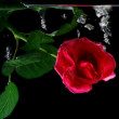 Red rose under water on black — Stock Photo #2116409